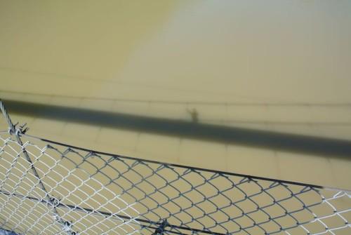 川はなんか茶色い